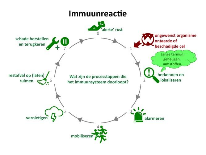 Immuunreactie